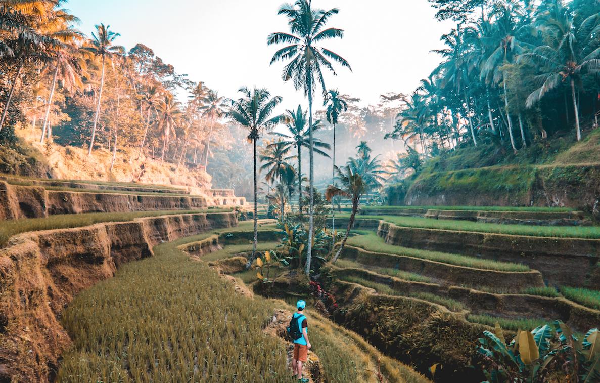 rice-paddy-fields-travel
