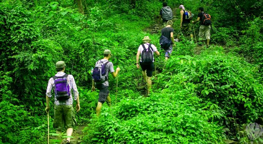jungle trekking in thailand